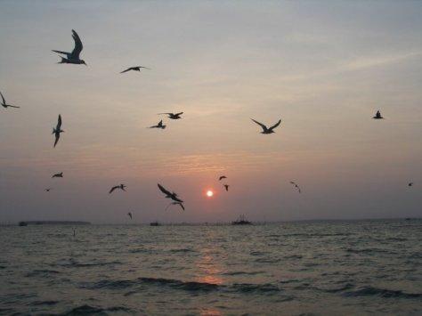 Burung camar bergembira menyambut matahari terbit di Tanjung Lesung. FOTO: KOMPAS/ROBERT ADHI KSP