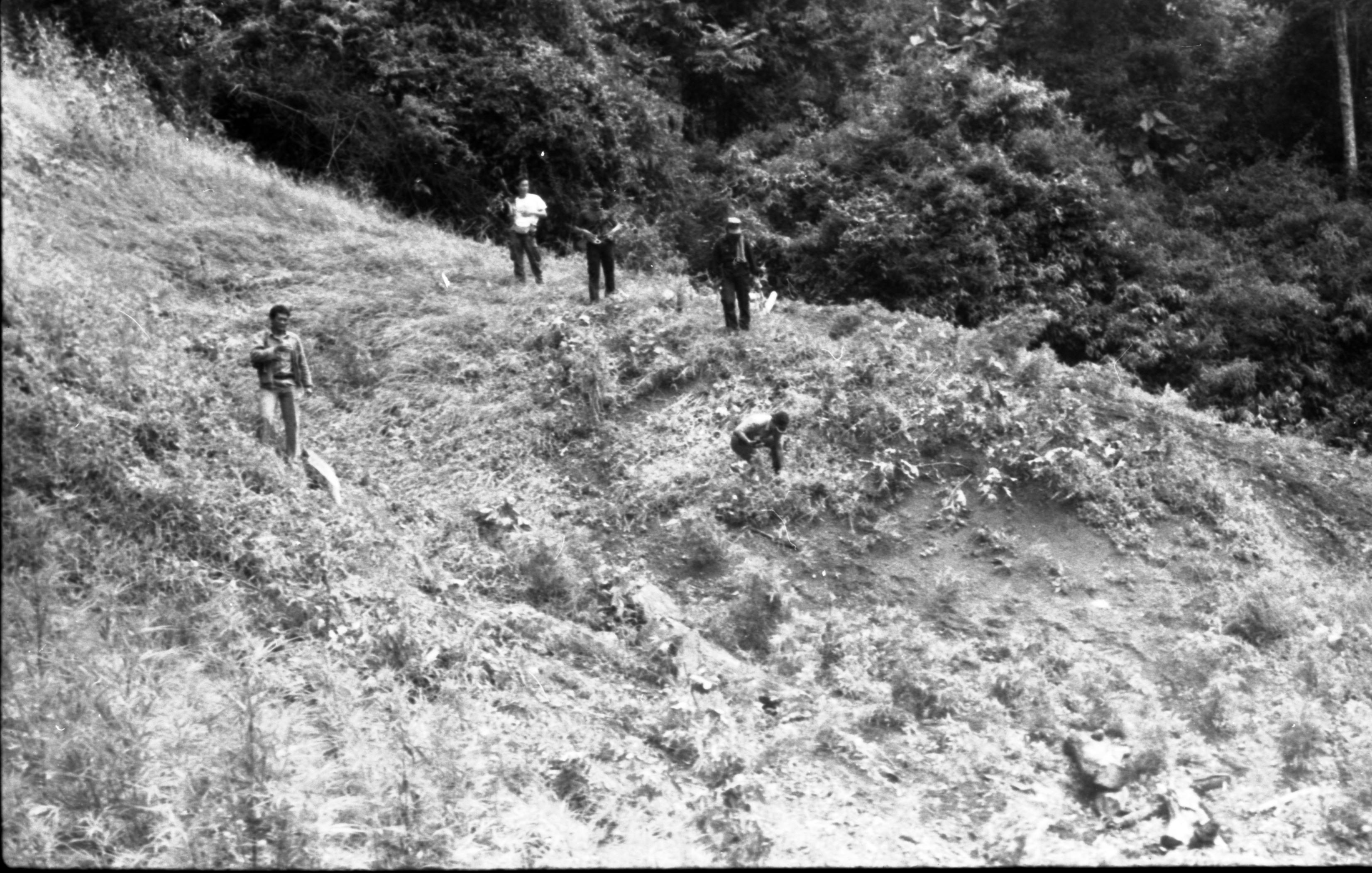 Operasi Ganja di Aceh